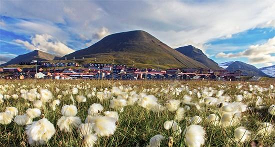 Taste of Svalbard